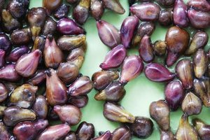 Grape Seed Extract and Skin Benefits