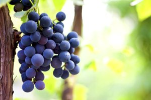 What Foods Are High in Resveratrol?