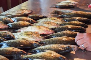 How to Cook Crappie Fish