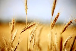Gluten-Free Diet for Fibromyalgia Improvement