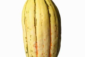 How to Cook a Delicata Squash