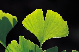 Gingko Biloba for Depression