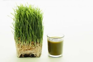 Barley Grass for Weight Loss