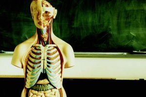 Definitions of Anatomy & Physiology