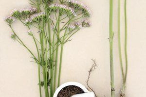How Much Valerian Root for Anxiety?