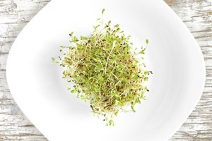 Bean Sprouts vs. Alfalfa Sprouts