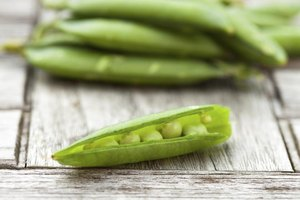 What Are the Benefits of Pea Protein?