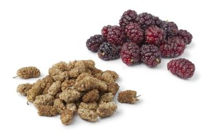 How to Dry Mulberries