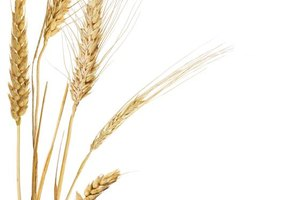 Risks of Avoiding Wheat