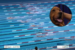 Therapy Dogs Are Scoring Big at the U.S. Olympic Swim T…