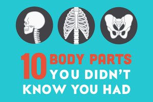 10 Body Parts You Didn't Know You Had