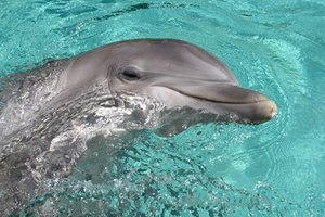 Where to Swim With Dolphins in Las Vegas