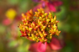 Rhodiola Interactions