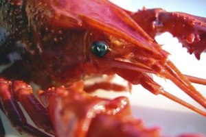 How to Prepare Live Crawfish