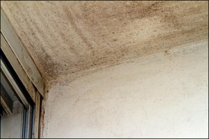 How to Get Rid of Mold & Fungus in Your Home