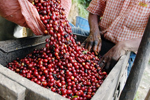 5. What Does 'Fair-Trade' Really Mean?