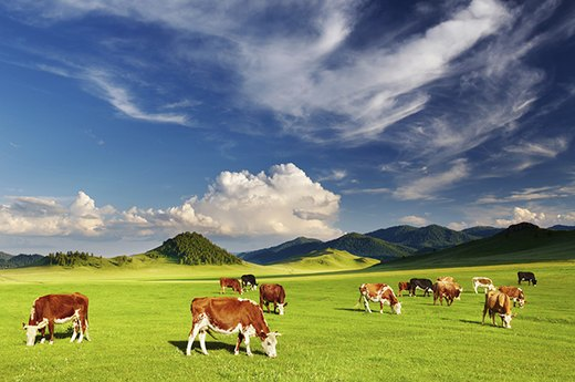 6. What Does 'Grass-Fed' Really Mean?