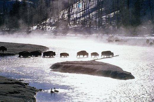 14. Best Park to Cast Your Line: Yellowstone National Park, Wyoming