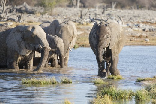 4. Etosha National Park and Skeleton Coast, Namibia