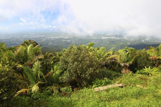 9. El Yunque National Rainforest, Puerto Rico