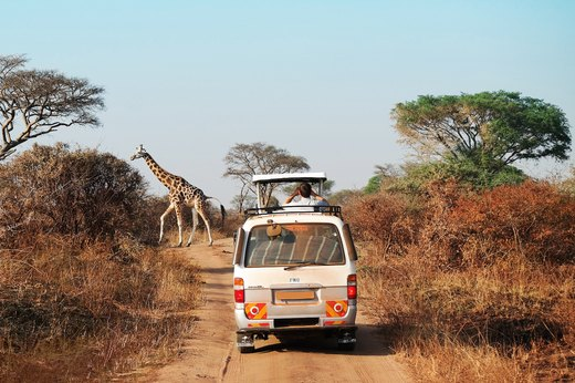 3. Take an African Safari