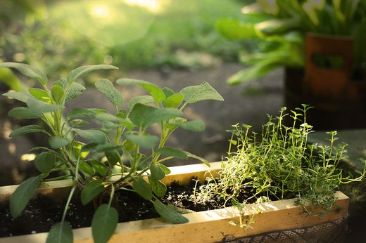 The 10 Best Fruits and Vegetables to Plant Anywhere