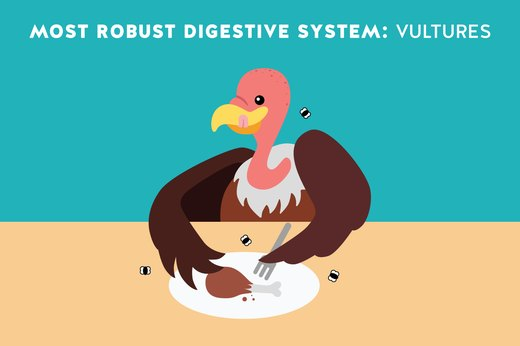 3. Most Robust Digestive System: Vultures