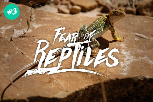 3. Fear of Reptiles