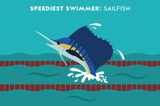 5. Speediest Swimmer: Sailfish
