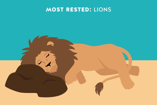 2. Most Rested: Lions