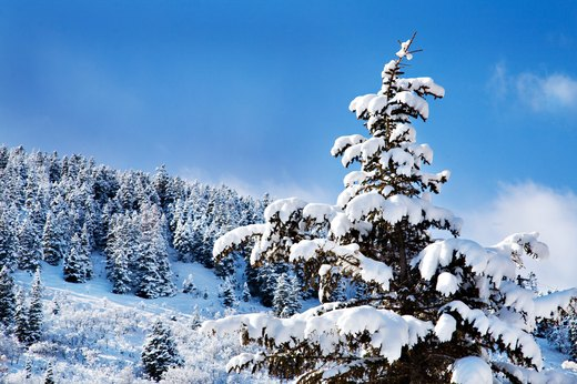 5. For the Snowshoer: Lost Prospector Trail, Park City, Utah