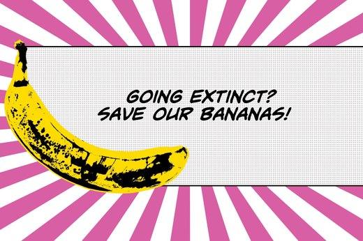 11. Are Today's Bananas at Risk of Going Extinct?