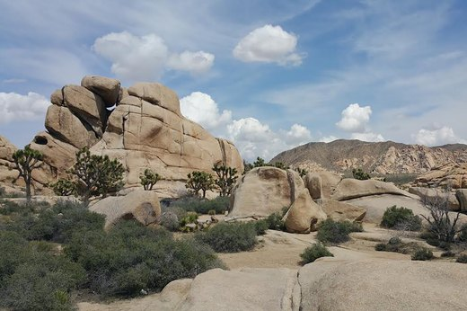 10. Joshua Tree, California