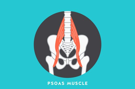 3. Psoas Muscle