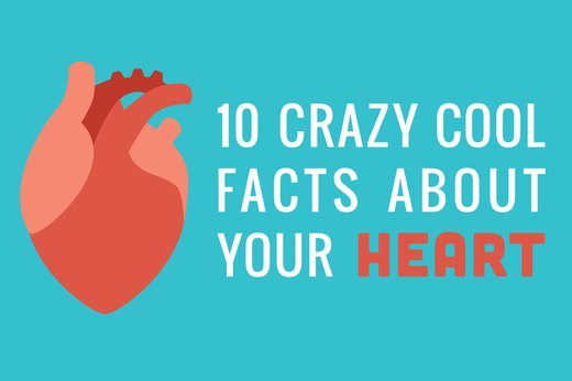 10 Crazy Cool Facts About Your Heart