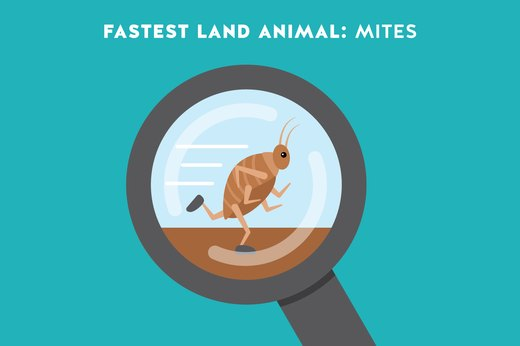 6. Fastest Land Animal: Mites