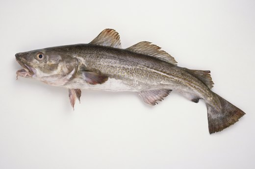 13 types of fish to avoid eating livestrong com for Cod fish mercury
