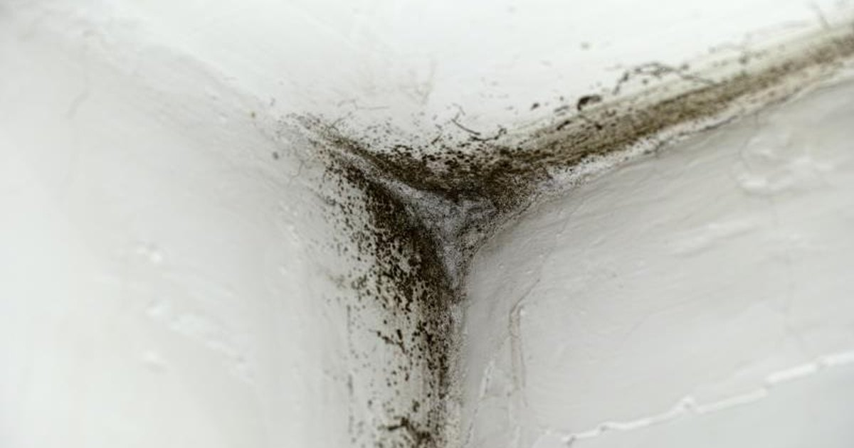 Illness Caused By Black Mold 47