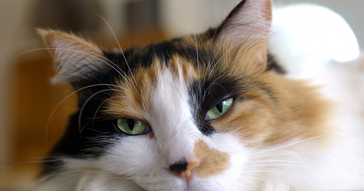 Cat Allergies Hives Itchy Skin And Asthma Livestrong Com