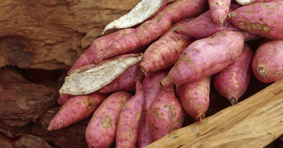 Casestudy demand of sweet potatoes in the united states
