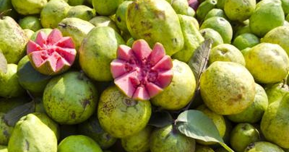 What are the benefits of guava livestrong ccuart Gallery