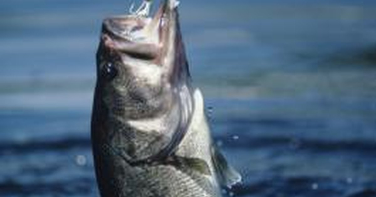 tom thumb fishing reels jpg 422x640