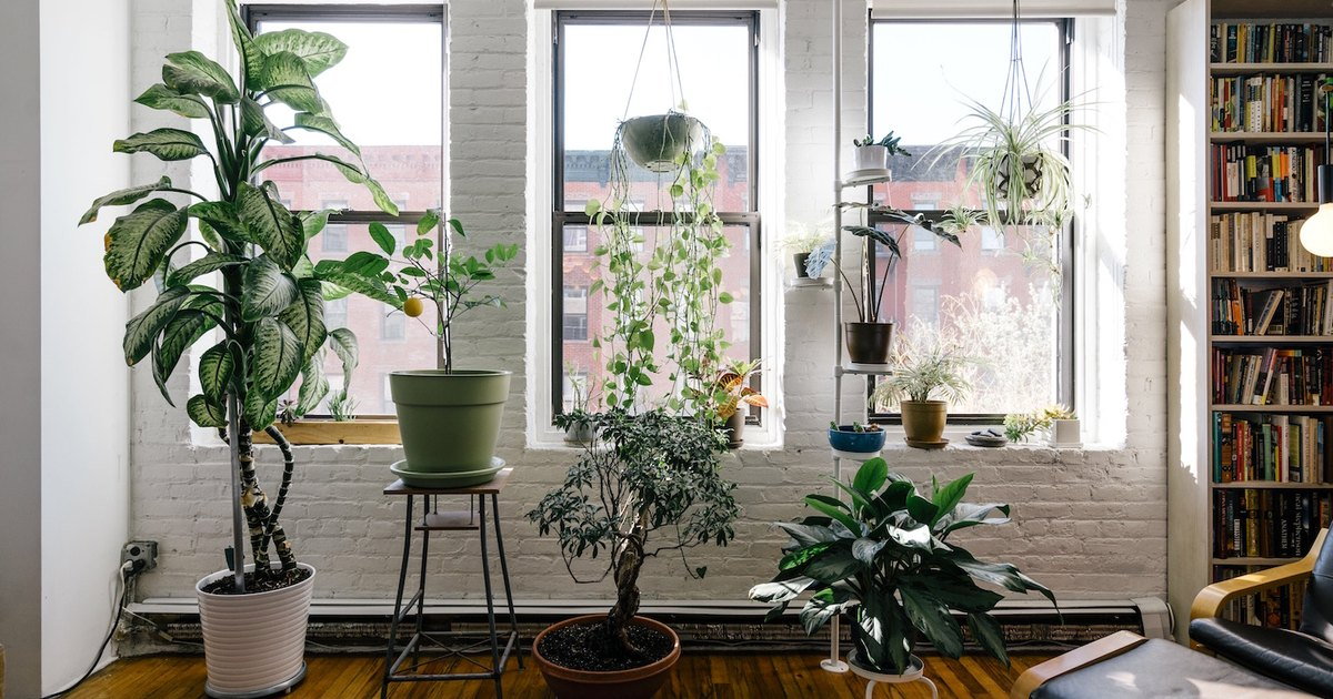 7 Instagram-Worthy Plants for a Healthy Home