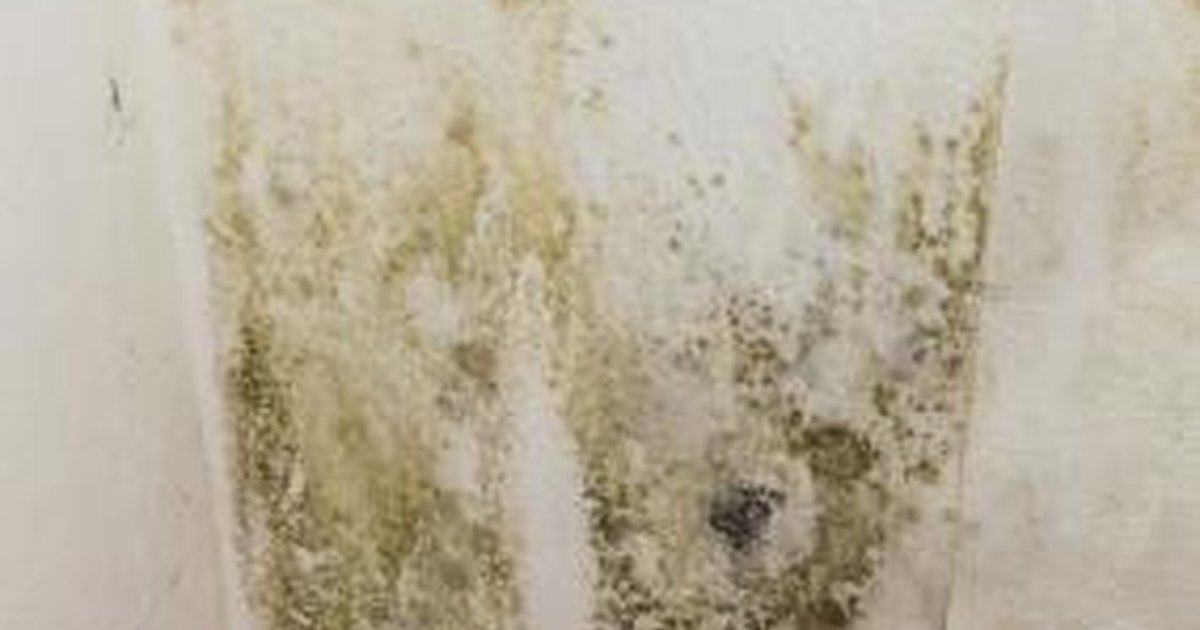 & Health Risks of Mildew | LIVESTRONG.COM