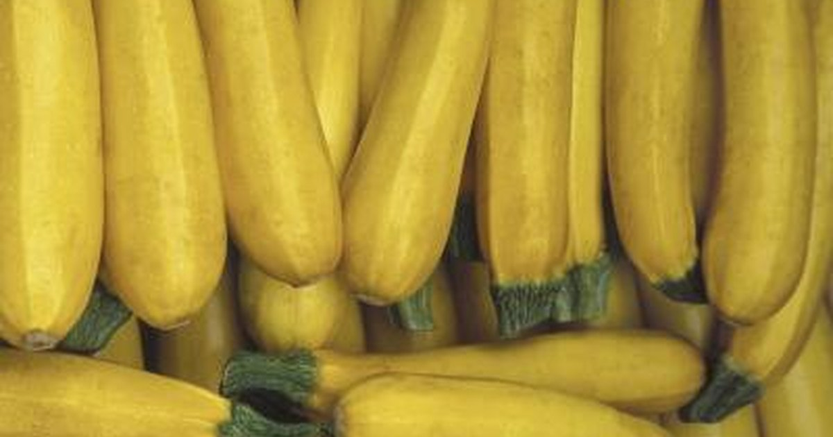 The Nutritional Value Of Yellow Squash Livestrong Com