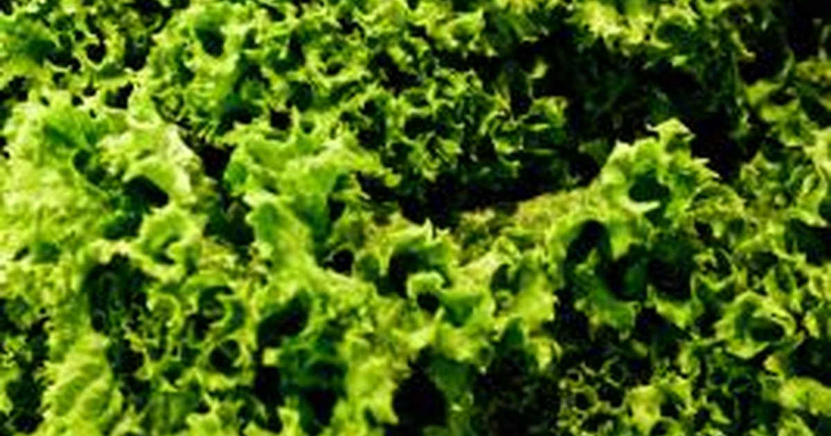 Can Dark Green Leafy Vegetables Increase Bleeding ...