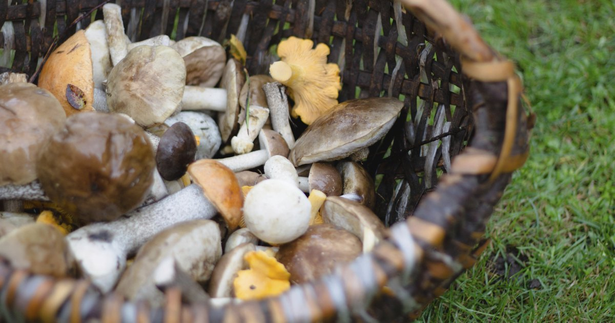 Mushrooms & Skin Rashes - LIVESTRONG.COM Mushrooms & Skin Rashes - 웹
