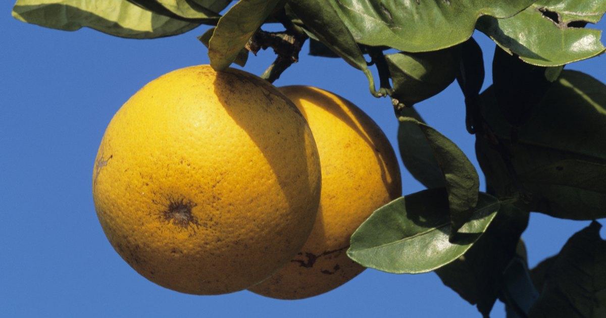 The Unofficial Mayo Clinic Grapefruit Diet Plan ...