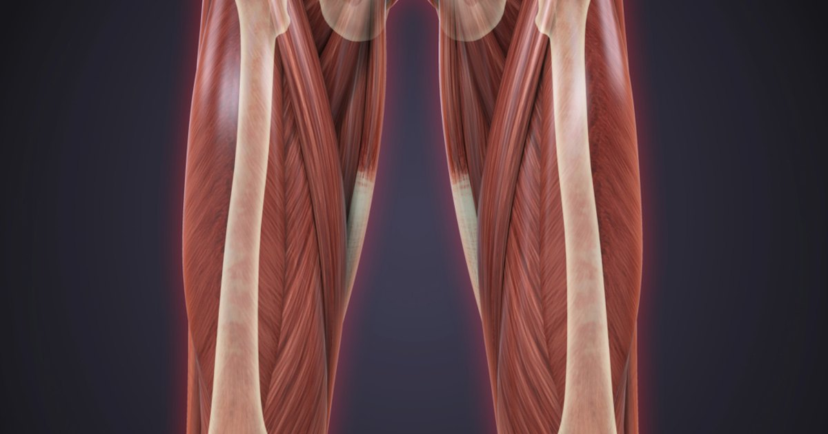 Sartorius & Gracilis Injuries | LIVESTRONG.COM