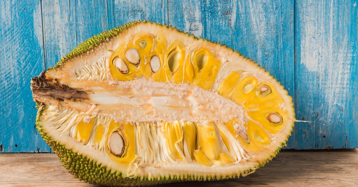 jackfruit background history and origin of a Free essay: jackfruit jackfruit, artocarpus heterophyllus, is said to originate from the western ghats although no one is definite on this amazon history and background amazon was founded in 1994 by jeff bezos, who is still the head of the company at the time.